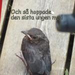 IMG_0737-001
